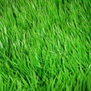 Запах свежескошенной травы